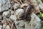 Skorpion110812181207