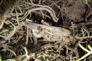 Wanderheuschrecke091904_0050
