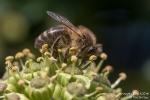 Insekten, Diverse