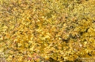 ZH-Herbstlaub151028142155