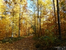 ZH-HerbstwaldAdlisberg181107113327