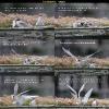 Flussseeschwalbe-Geschichte
