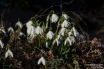 Frühlingsboten190226160529