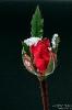 RoseWinter190205155225