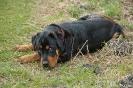Rottweiler050327121615