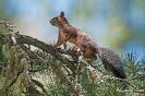 Eichhörnchen100719113720