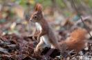 Eichhörnchen101120123100