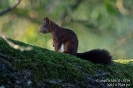 Eichhörnchen140906083639