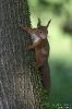 Eichhörnchen191025103706