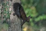 Eichhörnchen191025103912